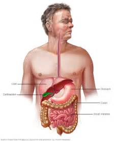 diseases of gastrointestinal tract picture 6