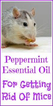 where to buy peppermint spray to get rid picture 8