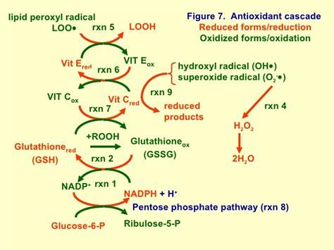 alpha lipoic acid antioxidant picture 6