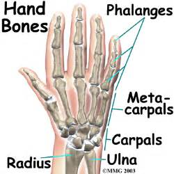 bones and joints picture 15