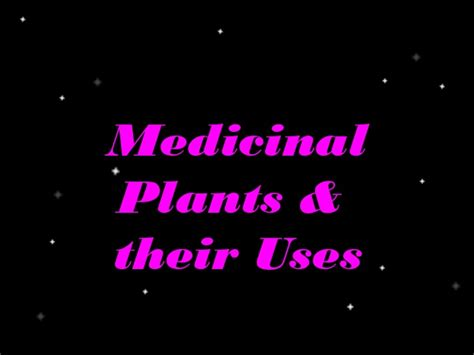 herbal plants and their scientific name picture 5