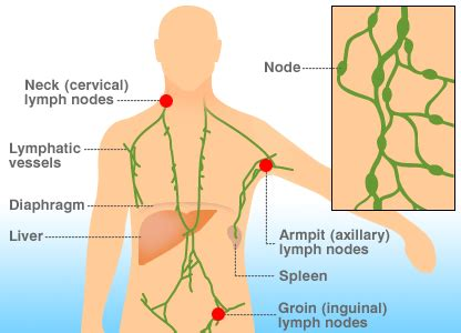 groin nodes and thyroid picture 5