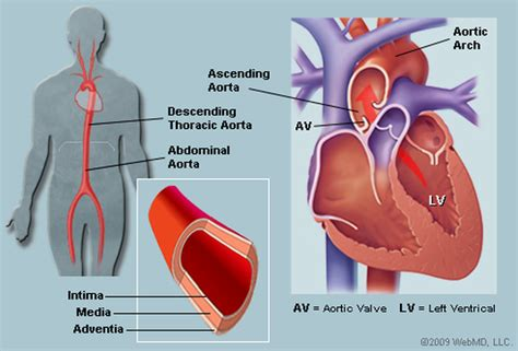 After childbirth blood pressure picture 14