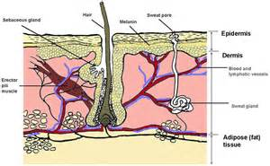 free images of aging skin illustration picture 9