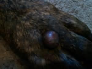 black wart like moles picture 5