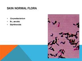 staph infections picture 17