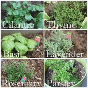 herbal plants like weed picture 5