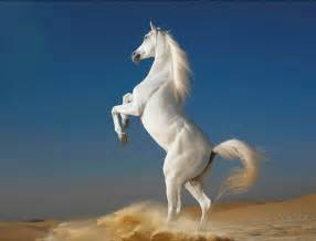 poze cu cai care fata picture 1