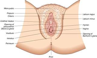 liver and loose vagina picture 6