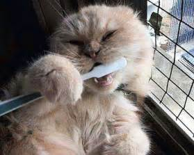 brushing a cat's h picture 7