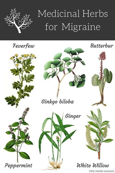 what natural herb natural herb that acts as picture 10