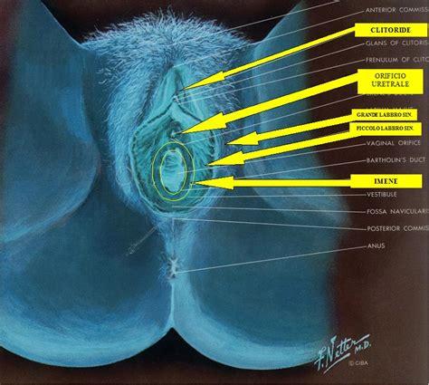 femei care ejaculeaza tare picture 10