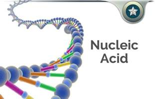testosterone and estradiol are nucleic acids picture 12