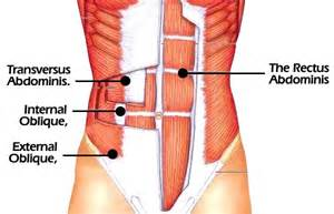 muscle pain in stomach when el movement picture 14