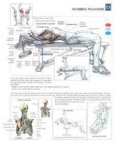 bodybuilding bones exercise and anatomy picture 10