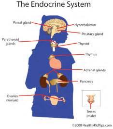 growth hormone dysregulation quizlet picture 14