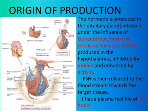 testosterone what is it made of picture 1