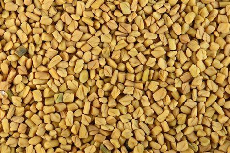 fenugreek seed picture 1