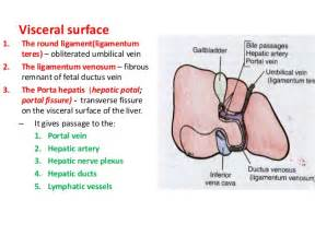anatomy of gall bladder picture 2