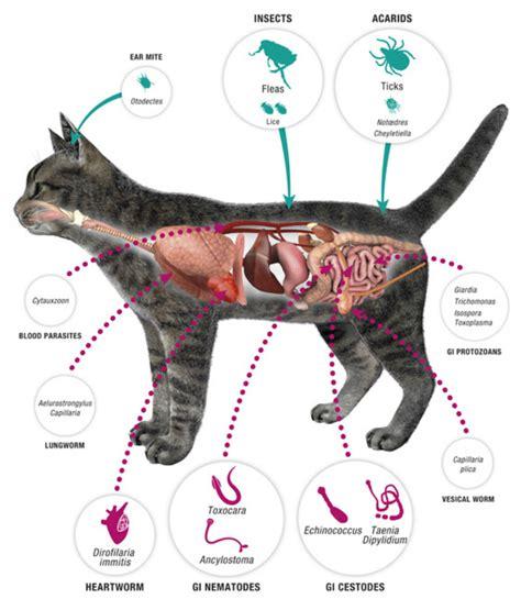 cat worm symptoms picture 9
