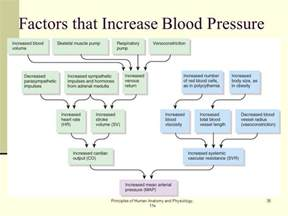 Human anatomy of blood pressure picture 5