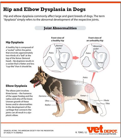 canine hip joint photos picture 3