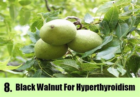 black walnut herbal remedy picture 13
