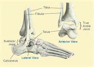 subtalar joint picture 19