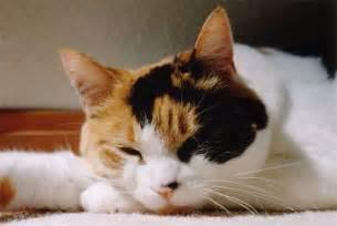 cat has spastic bladder picture 1