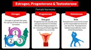 what are testosterone and estrogen responsible for picture 3