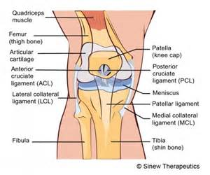 proprioceptive functions of soccer players' knee joints picture 16
