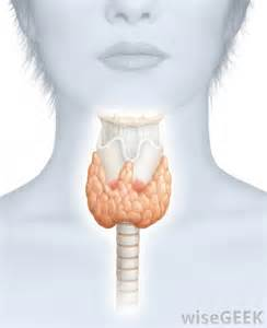 heart and thyroid picture 7