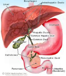 Cholesterol stone gall bladder picture 7