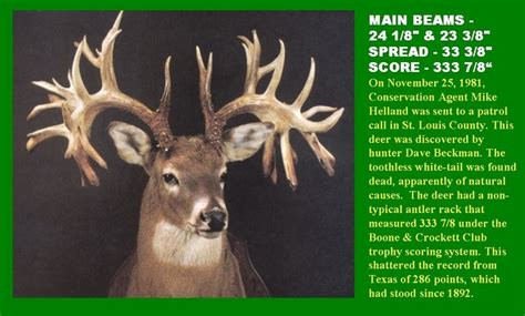 largest natural deer picture 5