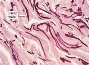 elasticity in skin picture 9