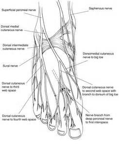 blood flow nerves picture 7