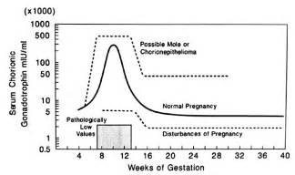 hcg levels during pregnancy picture 2