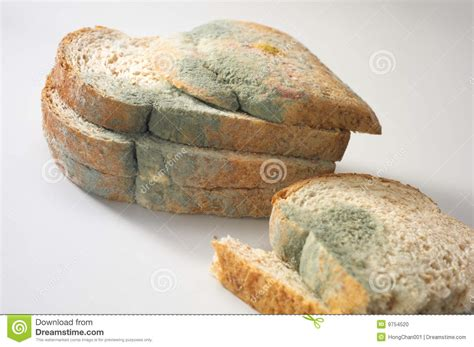 fungus on bread picture 10
