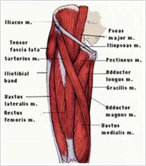 groin muscle pain picture 9