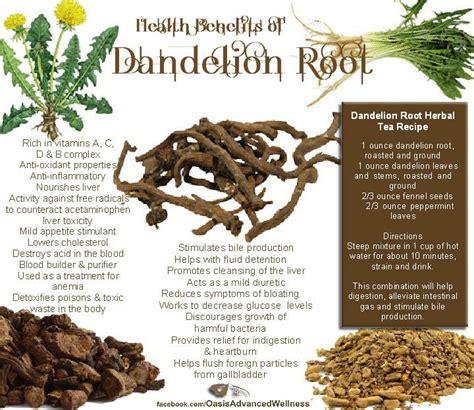 dandelion root tea benefits picture 3