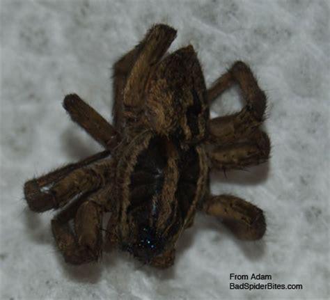 black spider fat burner is it bad for picture 11