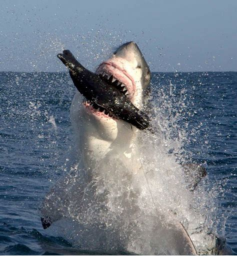 a shark's diet picture 11