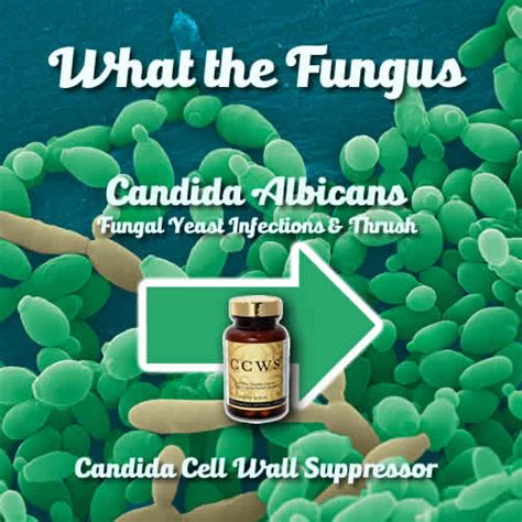 treatment for fungus in gastrointestinal picture 13