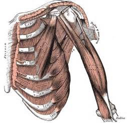 intercostal muscle pain picture 19