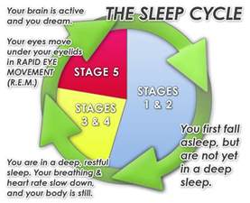 rem sleep cycle picture 14