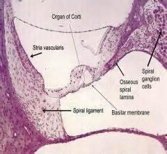6.2 bone pressed picture 6