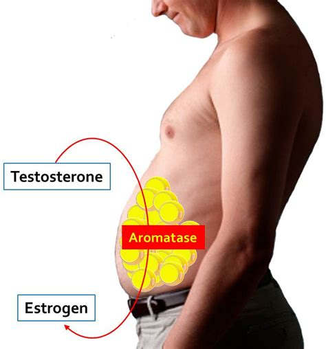 testosterone you and your hormones picture 1