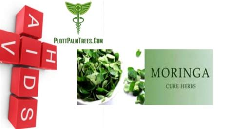 can moringa cure h picture 9