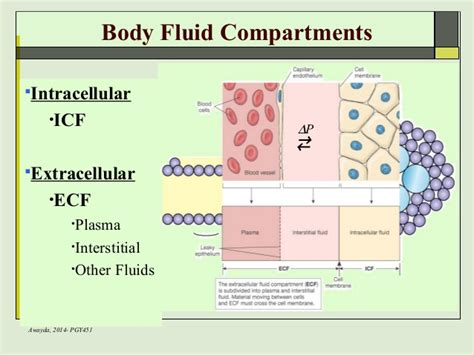 all functions of the liver picture 10
