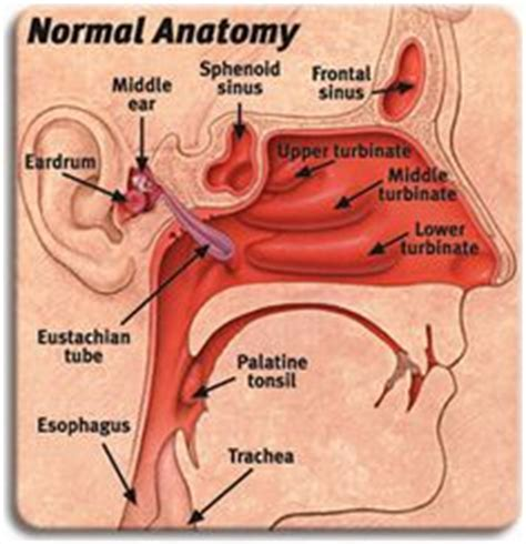 pain in sinus area,mouththroat picture 6
